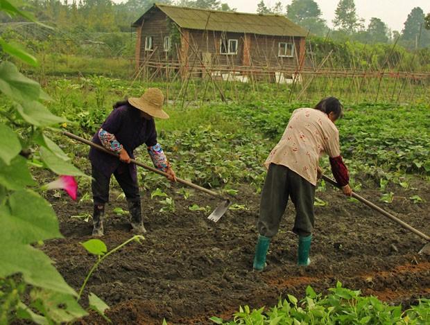 No vilarejoAnlong, produtores orgânicos continuam vivendo da terra e resistem ao avanço da urbanização (Foto: Giselle Paulino)