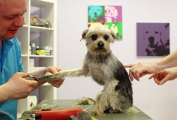 O Yorkshire Terrier 'Puppi' também ganhou um dia de beleza no The dog care company (Foto: Heinz-Peter Bader/Reuters)
