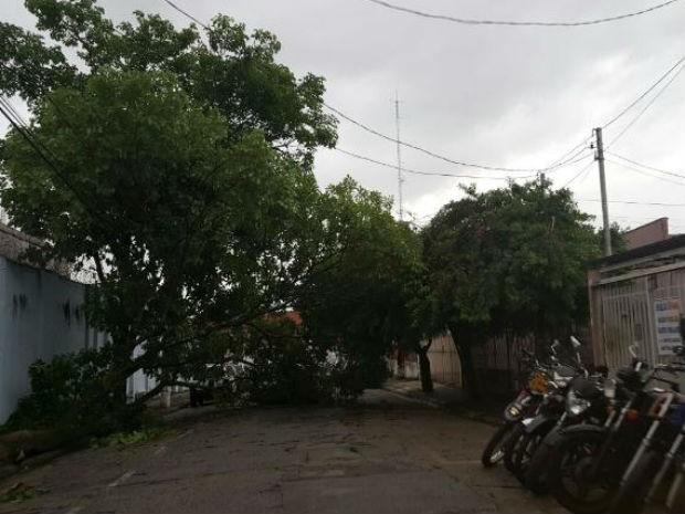 Chuva derrubou árvore na Vila São Caetano, em Sorocaba (Foto: Rosângela Ortega/Arquivo pessoal)