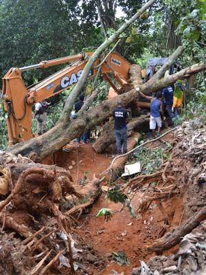 Árvore cai e mata operário em seu primeiro dia de trabalho durante obra realizada no Bairro de Valeria em Salvador (BA) (Foto: Romildo de Jesus/Futura Press/Estadão Conteúdo)