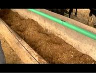 Produção do sorgo vira alternativa para alimentação animal em tempos de seca