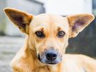 Feira disponibiliza 60 animais para adoção na prefeitura de Caruaru, PE
