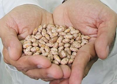 agricultura-feijao-embrapa-mexico (Foto: Divulgação/Embrapa)