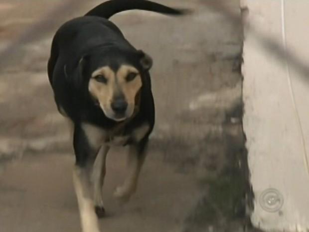 Pelo menos 20 animais morreram envenenados (Foto: Reprodução / TV TEM)