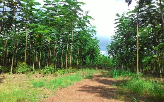 Área reflorestada (Foto: Claudio Pontes/Divulgação)