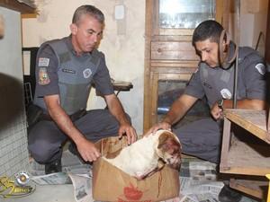 Cachorro foi socorrido por policiais (Foto: Divulgação/Polícia Militar)