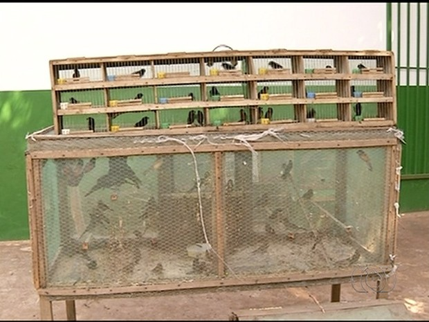 Mais de 200 aves foram apreendidas (Foto: Reprodução/TV Anhanguera)