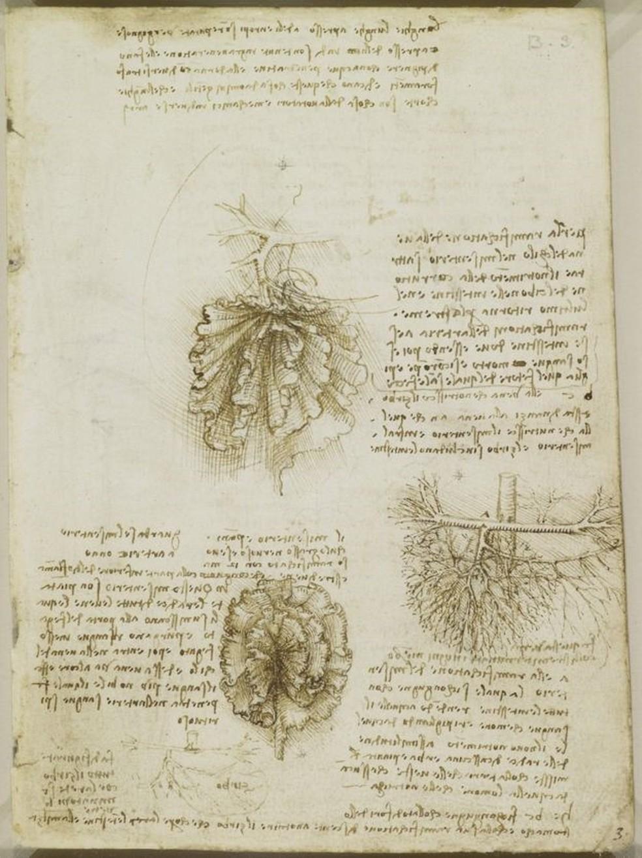 Primeira menção publicamente conhecida do mesentério foi feita por Leonardo Da Vinci, por volta de 1500 (Foto: Royal Collection Trust © HM Queen Elizabeth II)