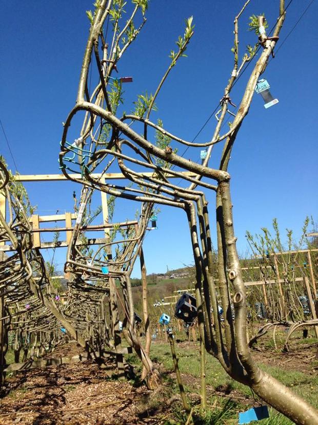Artista planta árvores em formato de cadeira (Foto: Divulgação)