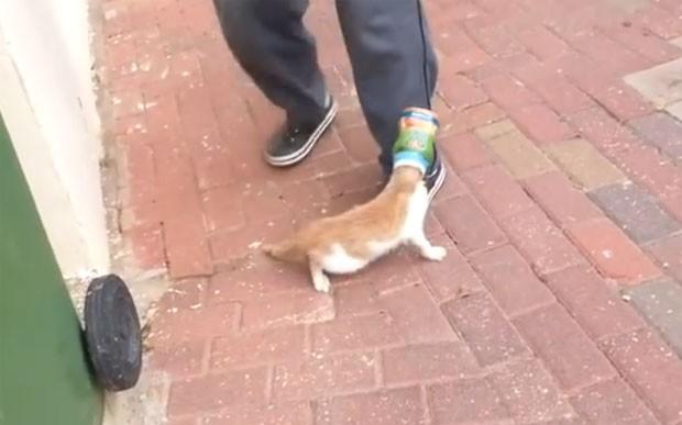 Gatinho foi encontrado com cabeça presa em frasco de plástico (Foto: Reprodução/YouTube/ViralHog)