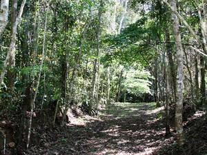 Programa Descobrindo a Florestas terá passeio em família (Foto: Ney Sarmento/ PMMC)