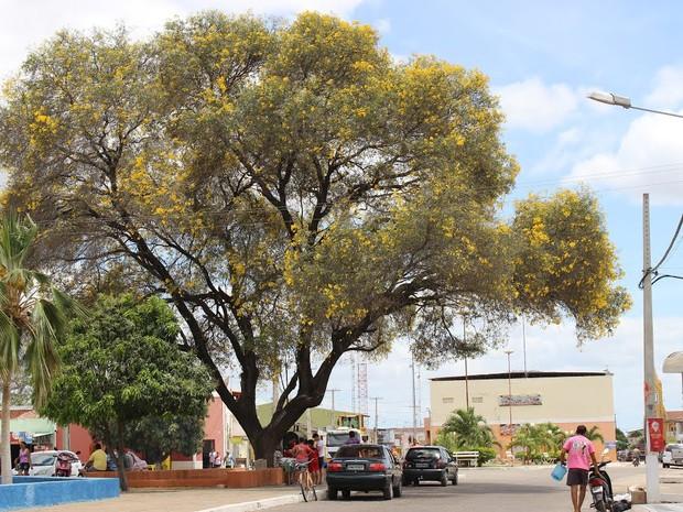 Crime aconteceu na cidade de Ipanguaçu, no interior do RN (Foto: Prefeitura de Ipanguaçu/Divulgação)