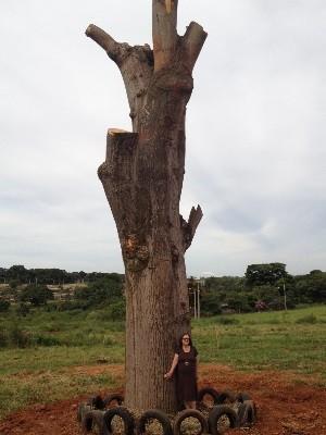Árvore atualmente Aposentada faz empréstimo de R$ 10 mil para salvar árvore em Goianira, Goiás 4 (Foto: Sílvio Túlio/G1)