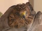 Morador de Feira de Santana resgata filhote de gavião que caiu de ninho