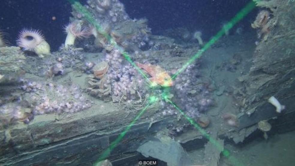 Um resto ainda não identificado na área de Viosca Knoll, no Golfo do México (Foto: BOEM via BBC)
