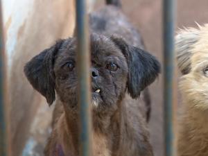 Cães são encontrados em situação de maus-tratos em chácara (Foto: Reprodução/EPTV)