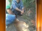 Onça parda é resgatada após ser atropelada em Botucatu