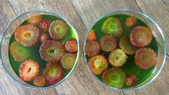 Veja receitas de gelatina com frutas e sorvete de banana com morango