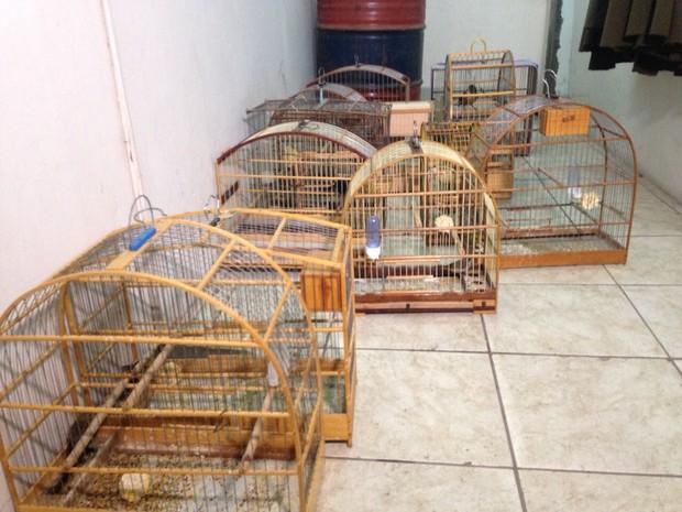 Polícia encontrou gaiolas com 12 aves silvestres em residência de São Leopoldo (Foto: Dayanne Rodrigues/RBS TV)