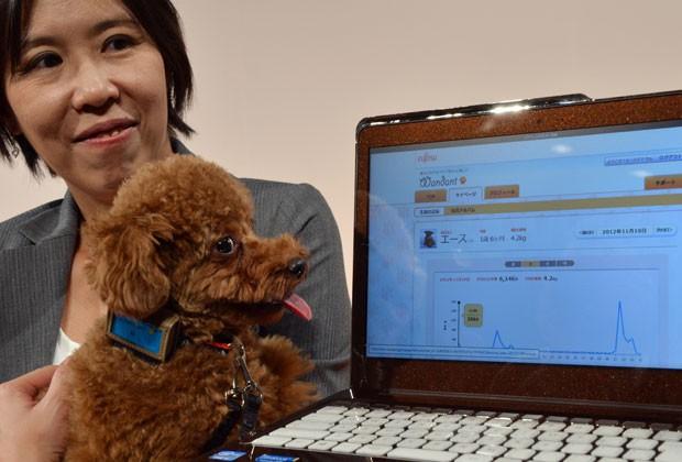 Yoko Mitsuyama, funcionária da Fujitsu, apresenta equipamento que monitora dados de cachorros em seu animal de estimação, 'Ace', em Tóquio nesta terça-feira (27) (Foto: Yoshikazu Tsuno/AFP)