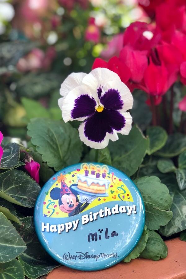 Button de aniversário (Foto: Cosmopolitando)