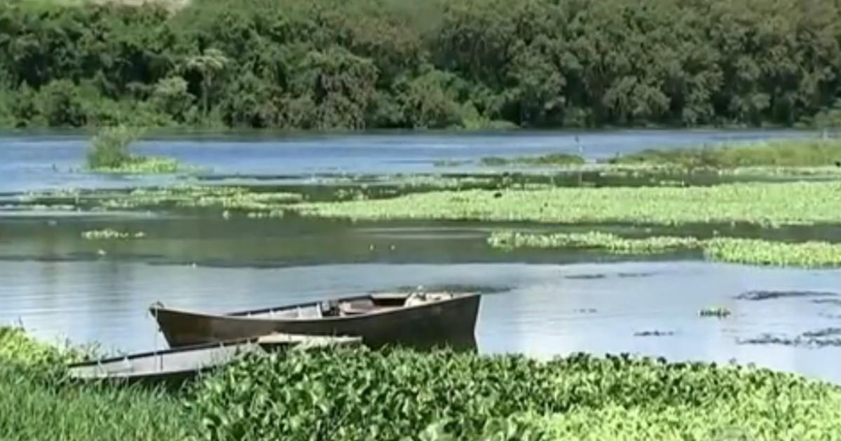 Planta aquática muda a paisagem do Rio Tietê e impressiona ... - Globo.com