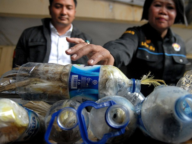 24 aves aprisionadas em garrafas plásticas foram encontradas por agentes alfandegários da Indonésia (Foto: Reuters/Antara Foto/Risyal Hidayat)