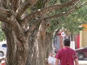 Moradores de Itapetininga querem mais árvores na região central da cidade (Foto: Reprodução/TV TEM)