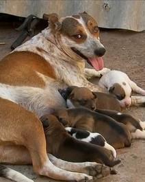 Cadela salva filhotes do fogo