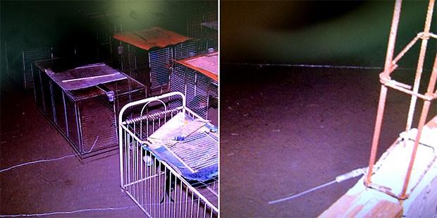 Mãe da criança morta disse que a cerca, feita com fios bem finos, foi armada para evitar o roubo de galos de briga que são criados pelo vizinho (Foto: Reprodução/Inter TV Cabugi)