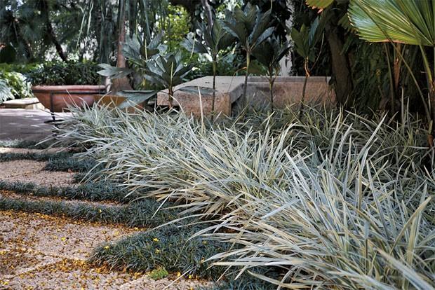 Plantas brancas: 4 espécies para usar no seu jardim (Foto: Reprodução)