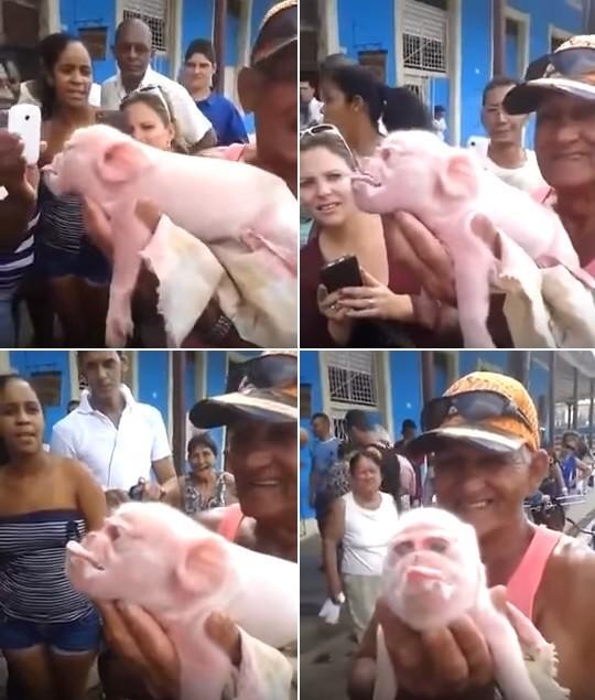 Porco-macaco assusta e vira atração em pequena cidade cubana
