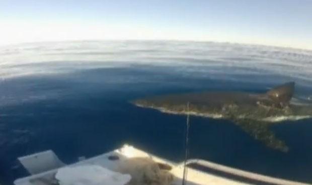 Pescadores estavam a 3 km da costa no estado de Victoria (Foto: Reprodução)