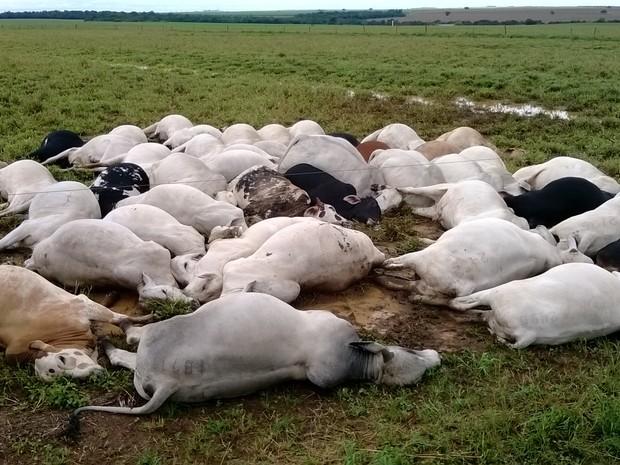 Animais são mortos por raio em fazenda de Pedro Afonso (TO). (Foto: Divulgação/João Damasceno de Sá Filho)