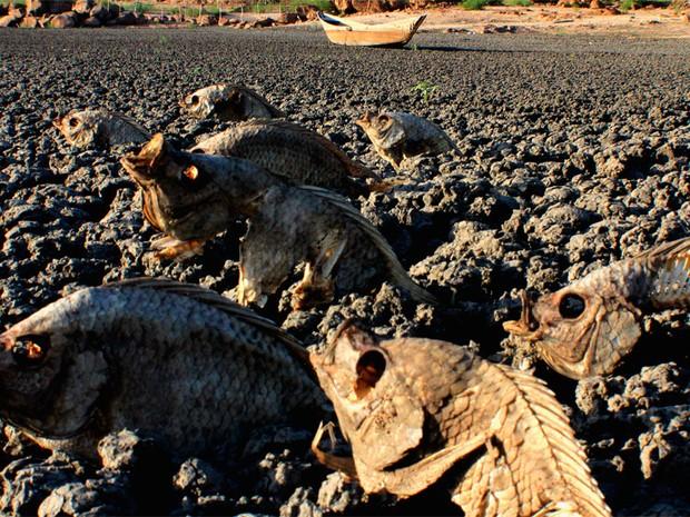 Açude na cidade de Paraú secou, matando todos os peixes (Foto: Aldair Dantas)