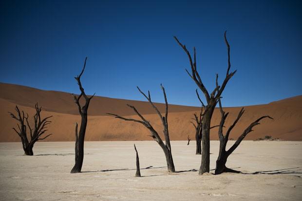 Árvores mortas na região de Deadvlei, no deserto de Sussublei, na Namíbia (Foto: Martin Bureau/AFP)