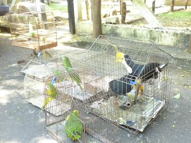 Aves silvestres eram capturadas em fazendas e levadas para a capital de MS (Foto: Joanice Battilani/ Ibama)
