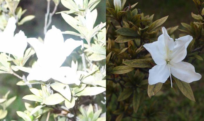 Imagem à esquerda é um exemplo de flash mal aplicado. As folhas refletiram a luz, causando uma luminosidade excessiva (Foto: Pedro Zambarda/TechTudo)