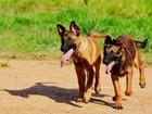 No AC, veterinário orienta sobre cuidados com animais no Réveillon