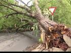 Motociclista morre após bater em árvore que caiu com vendaval