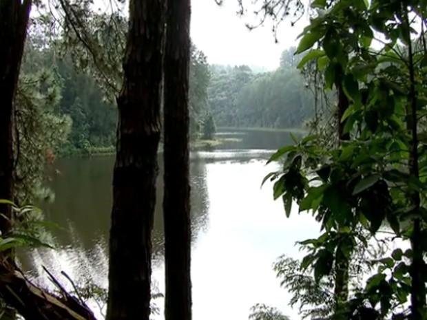 Vista do Parque Estadual da Cantareira  (Foto: Reprodução/ TV Globo)