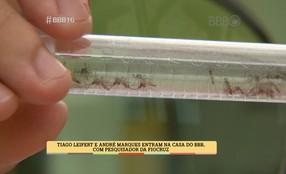 Tiago Leifert e André Marques mostram como combater o Aedes no BBB
