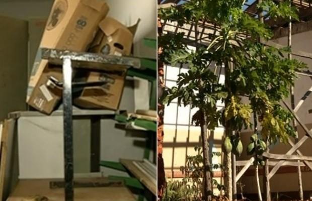 Sala de aula serve de depósito; pé de mamão cresce em meio a obra, em Petrolina, Goiás  (Foto: Reprodução/ TV Anhanguera)