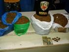 Quatro pessoas são presas por suspeita de tráfico de drogas, no AM