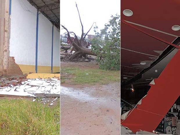 Chuva e ventos fortes derrubam árvores, muro e teto de loja no oeste da Bahia (Foto: Edivaldo Braga/Blogbraga)