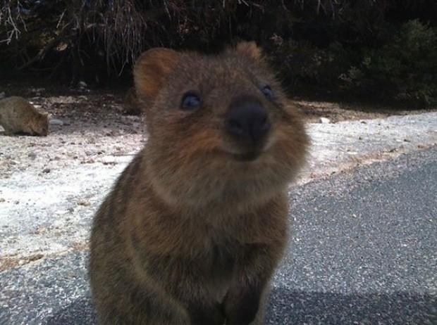 Traços do mamífero, que sugerem que está sempre 'sorrindo', renderam-lhe título de animal 'mais feliz' (Foto: Reprodução)