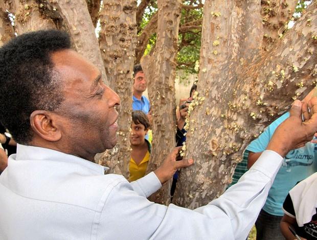 Pelé árvore comemoração Três Corações especial (Foto: Alexandre Alliatti / Globoesporte.com)