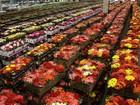 Apae realiza 6ª Feira de Flores de Holambra, em Jaru, RO