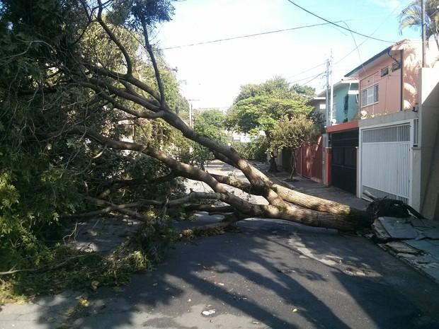 Árvore caída nas ruas Luisiana e Guaraiúva, no Brooklin, zona sul de São Paulo. (Foto: Shin Suzuki/G1)