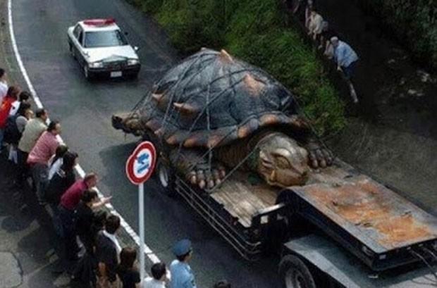 Imagem falsa de uma tartaruga descomunal que circula há meses na internet continua gerando boatos sobre sua existência (Foto: Reprodução)